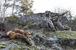 Ulf Lindroth kan konsten att locka räv. Nu reser han runt i landet och lär ut till andra rävjaktsintresserade jägare. Foto: Holger Nilsson.