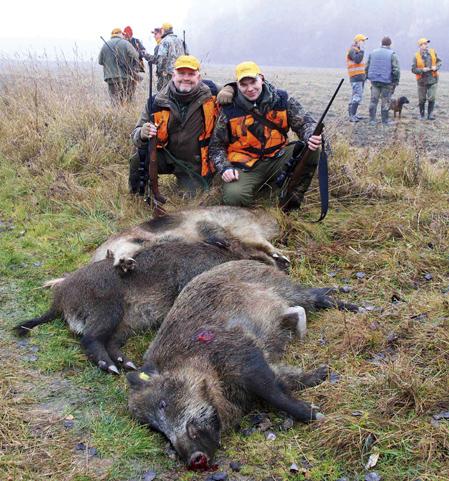 Har rusar vildsvinen over vagen
