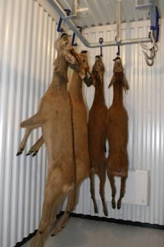 Acceptansen för jakt ökar och allt fler vill äta ekologiskt som till exempel viltkött.