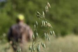 Vildsvinen ska förvaltas i Sörmland, men stammen ska också minskas för att skadorna i lantbruken inte ska bli en för stor belastning.
