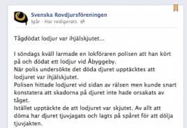 Rovdjursföreningen drar stora växlar på incidenten med det påkörda lodjuret utanför Gävle i söndags kväll.