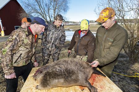 Tomas Sandström, till vänster, kan inte annat än skratta åt den uppblåsta bävern.
