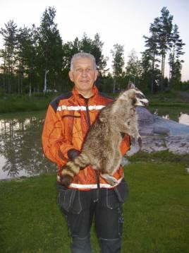 Roger Lundberg med tvättbjörnen som sköts i Västervikstrakten i fjol. Foto: Privat.