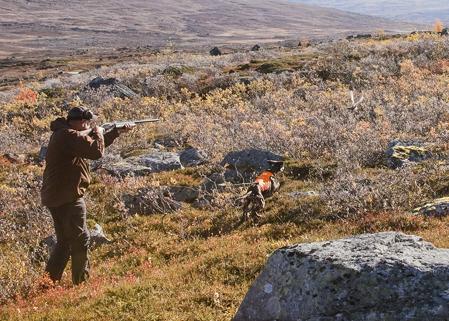 Micke tar några steg mot hunden som reser ripan.