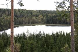 Fodertillgången är viktig när man ska besluta om till exempel älgtilldelningen anser Skogsstyrelsen. Foto: Holger Nilsson.