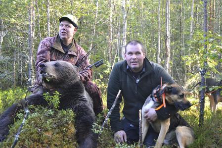Leif-Åke Olsson, Enviken med sitt livs första björn, efter ett bra jobb av Daniel Birgersson och halvstövaren Putte.