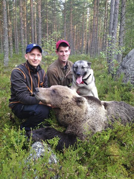 I morse sköt Adam Jansson, t v, årets andra björn tack vare den unge gråhunden Högvaktens Roy och ägaren Johan Wennberg, Edsbyn.