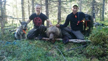 David Sundqvist, Sunne, fällde idag sin första björn, här tillsammans med jaktkompisen Anders Hultstrand, Säffle, och jämthundstiken Åsbråtens Beda och plotten Rodriguez Ursus Sally.