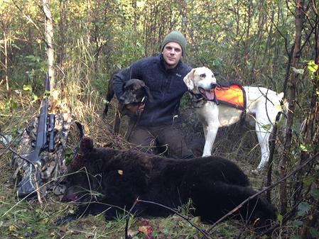 Sveriges kanske konditionsstarkaste björnjägare, Niklas Friberg, har riktigt bra fart på sina hundar och kommer i morgon att släppa i skogarna utanför Orsa.