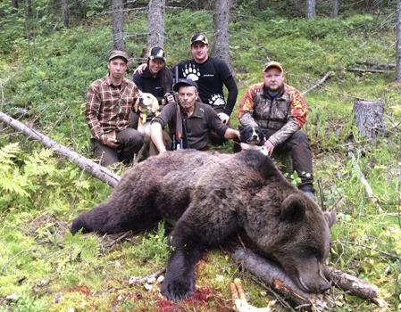 Glada jägare med dagens fällda björn. Från vänster Erik Hamberg, Natalie Jonsson, Per Johan Hamberg, Robert Salomonsson och PJ Bergkvist.