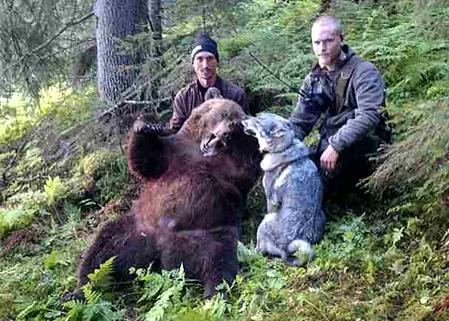 Anders Hultstrand, t v, fällde i morse en av de största björnhonor som skjutits i landet. Här med jaktkompisen David Sundqvist.