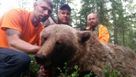 Honan på 95 kilo som föll i Sörviken, Hammerdal kommun.