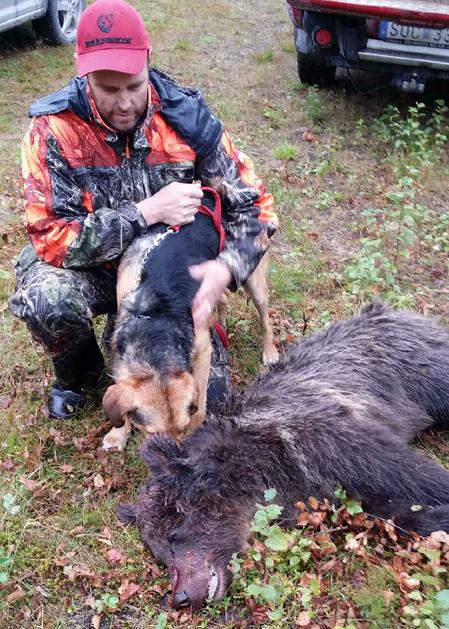 Blandstövaren Gunvald gjorde även i söndags ett bra björnjobb. Här med husse Hasse Nornholm som fällde björnen i marker utanför Katrineberg.