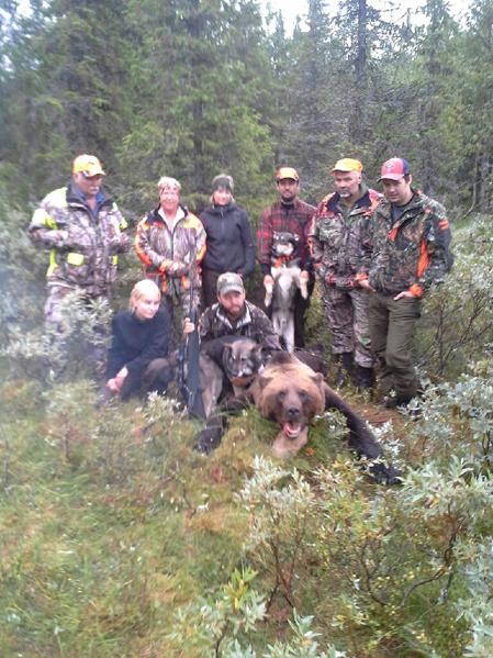 Det blev en kort men intensiv björnjaktsmorgon för jaktlaget på Månsberget. Marucs Och Daniel Lundqvists duktiga blandrashundar skötte jobbet som Marcus fick avsluta.