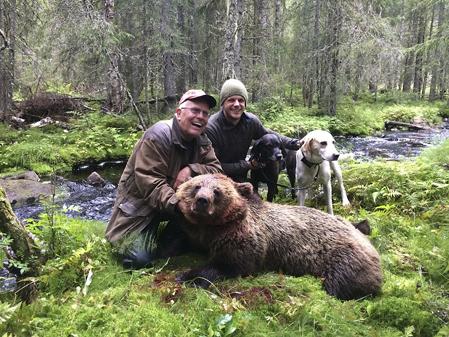 Conny Sundberg fällde en mindre björnhona för Niklas Fribergs hundar i lördags.