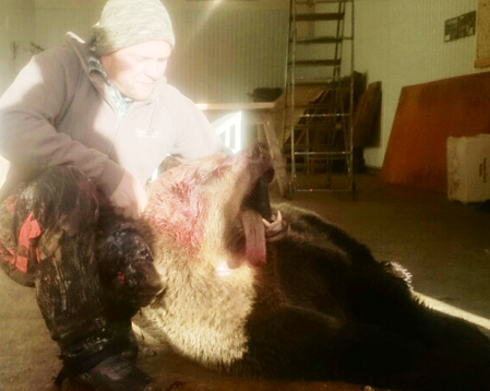 Kanske årets första björnskytt, Patrik Hägglund, med en hona på 157 kilo. Foto: Morgan Berg