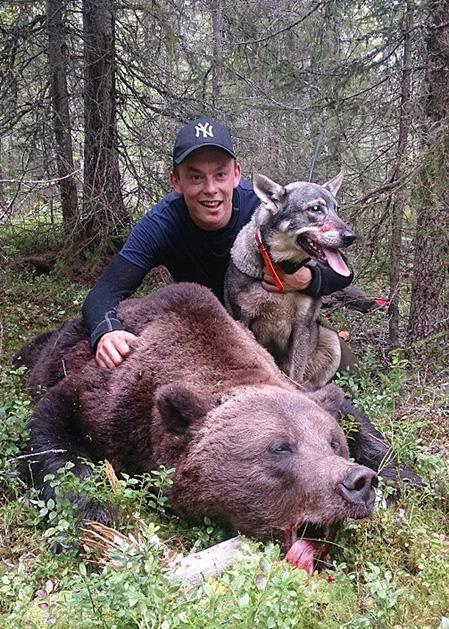 Idag gick drömmen om att få skjuta en björn i uppfyllelse för Robin Leandersson, Laholm.