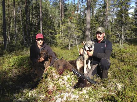 Jerker Myrén med sin plotthund Rex och Johnny Rehn med jämthunden Albertssons Frost avslutade förmiddagens björnjakt tillsammans.