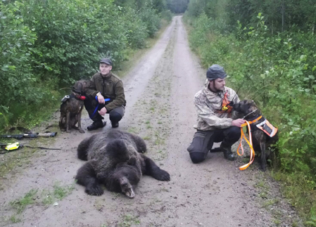 Peter Berlund, plotthunden Kato tillsammans med Andreas Edin, plotthunden Texas och en björnhona på 115 kilo.