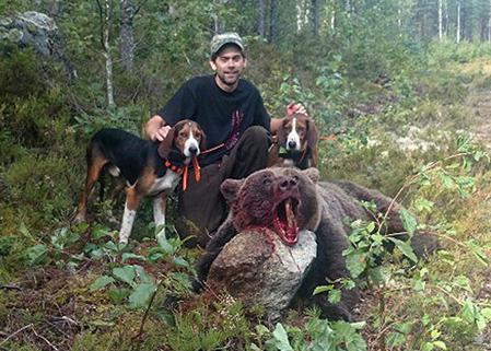 Johan Eriksson, Norrbo, lyckades fälla björnen, en hona på cirka 120-130 kg, efter fem timmars grymt hundarbete efter finnstövarna Bull och Lynx.