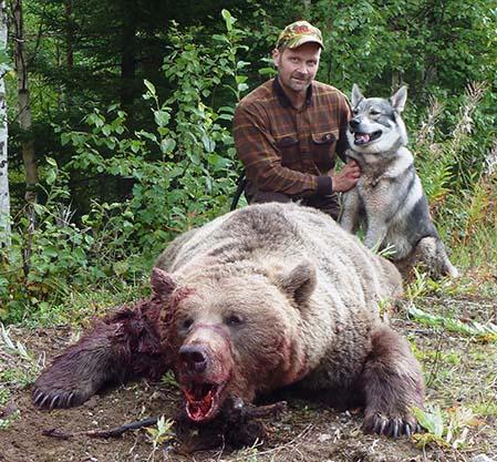 Magnus Persson, Stugun med jämthunden Bamse, 3 år och björnhonan som vägde 172 kilo.