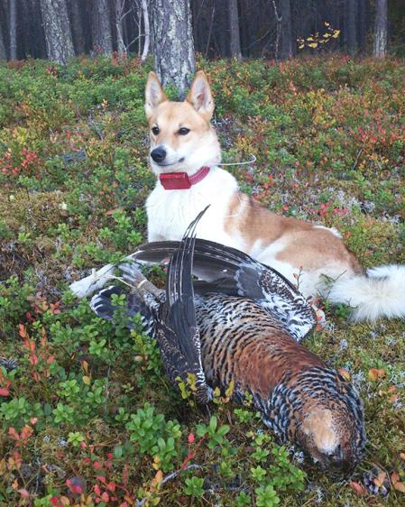 Skarnäbbens Theia i det element hon trivs bäst i. Gårdagens seger var nog mer en fjäder i hatten för husse. Foto: Privat
