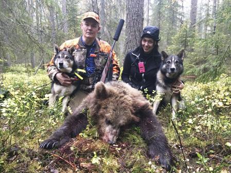 Roberts hundar stod bakom den sista björnen i Norrbottens län. Mikael Karlsson fällde den och Natalie var också med på jakten. Foto: Robert Salomonsson