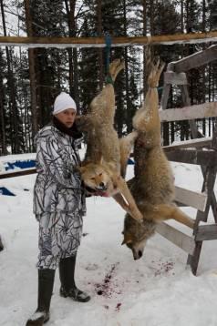Efter Jaktjournalens analys av Naturvårdsverkets beslut om möjligheter till licensjakt på varg verkar det bara finnas möjligheter till jakt i Värmland och Örebro län av någon större omfattning.
