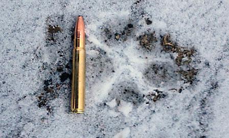 Vargens spår syntes tydligt i snön och har bekräftats av länsstyrelsens personal i Jämtland