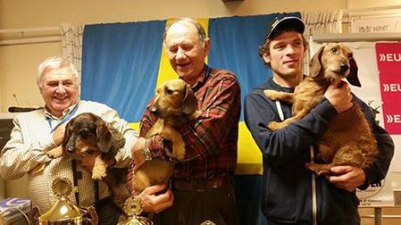 De tre bästa hundarna på Tax-Sm och därmed kvalificerade till Småhunds-SM. Foto: Svtk