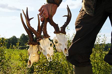Det blir nu lite mer omständligt att bleka jakttroféer.
