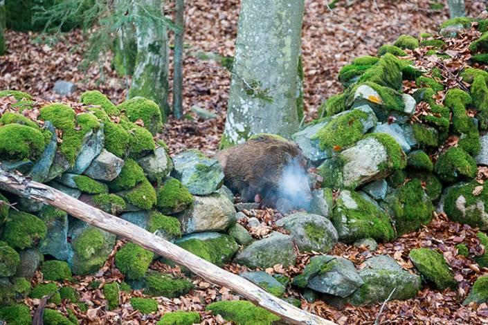 En ensam brungris smyger plötsligt upp i ett hål i stenmuren tolv meter från tornet.