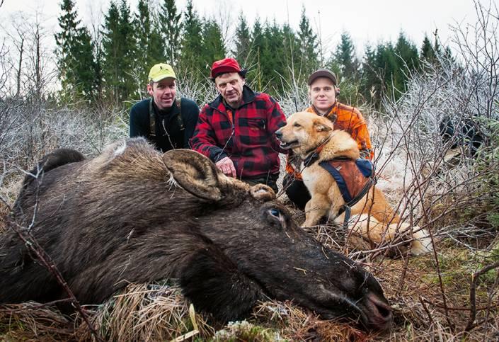 Hundägare, skytt och hund intill dagens älg, Sävlidens Janos 21:a i ordningen.
