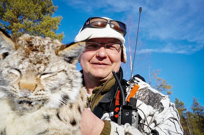 Ett mindre lodjur som Anders Lindqvist sköt för två amerikanska foxhounds strax utanför Sveg.