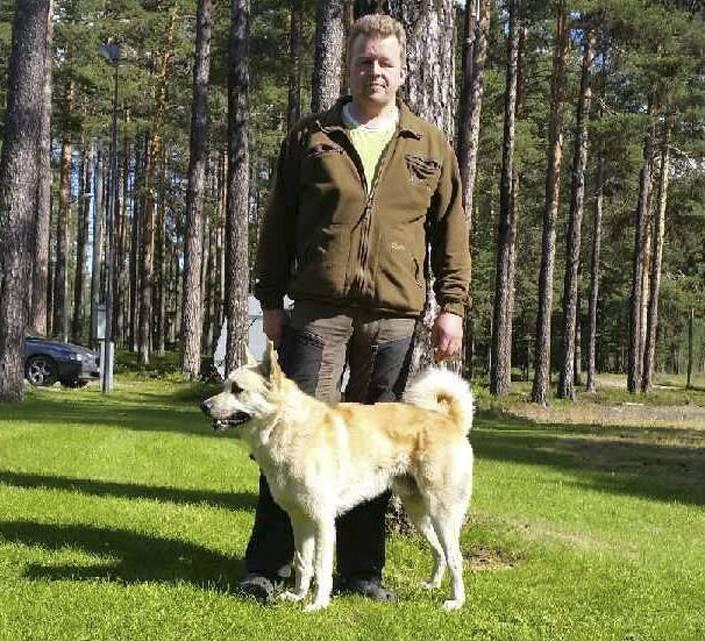 Hälleforsaren Rävamyrens Sigge, blir den första i sin ras som startar på Älghund-SM, ägare är Anders Broman, Skorped.
