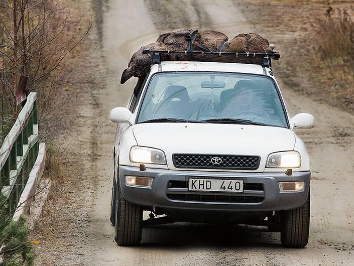 Antti får hjälp av ett par elever på naturbruksgymnasiet att dra fram kalven till vägen. Resten av resan till slakteriet fortsätter på Rav 4:ans biltak!