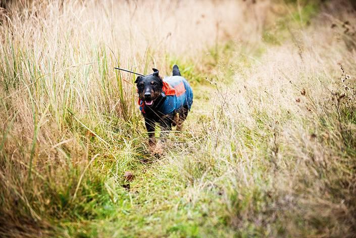 Trots att Addis jaktlust är stark är han väldigt följsam.