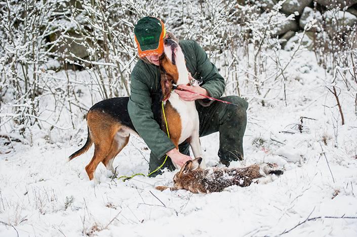 Första drevet på snö är över, både husse och hund är nöjda.