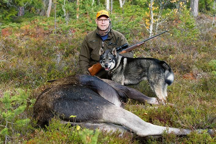 Fredrik Eriksson gläds tillsammans med Sörombäckens Ivar efter att vinnarjaktens tredje vuxna älg fällts.
