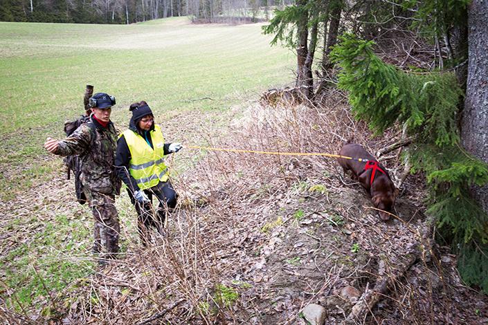 För säkerhets skull ringer Magnus in en spårhund utan att röra om för mycket längs spåret. Susanne Gunnarsson anländer med en labrador som får göra en spårning på cirka 100 meter.