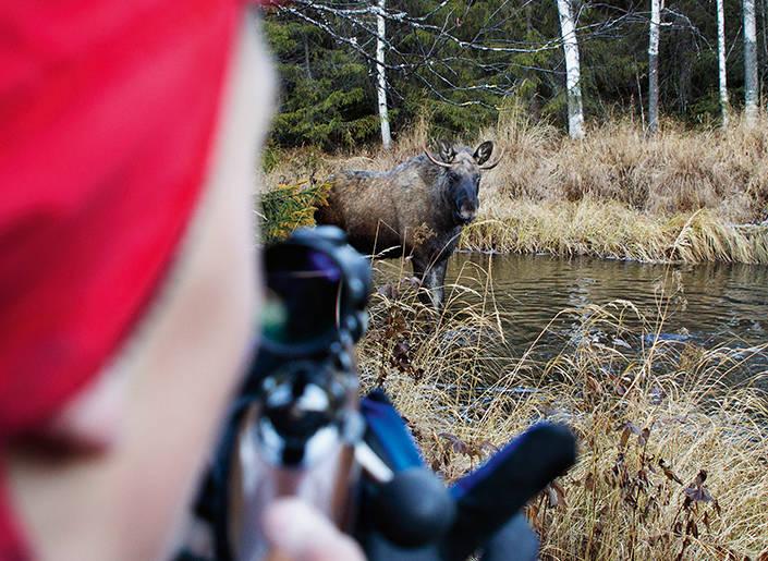 När Oskar höjer bössan är det cirka tio meter till tjuren som ännu inte förstått vad som kan hända.