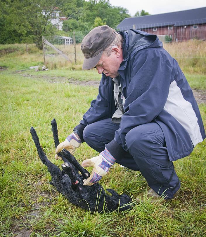 Bertil Andersson har arbetat många år som rovdjursspårare och besiktningsman på Länsstyrelsen i Västra Götalands län. Arkivfoto: Per Jonson