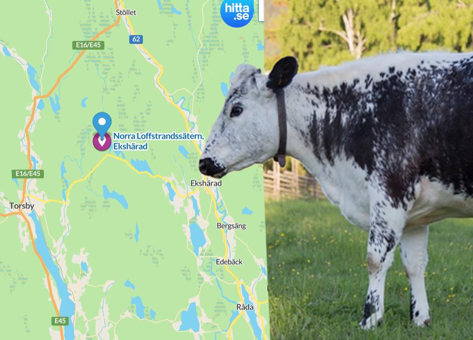 Svensk fjallko utrotningshotad