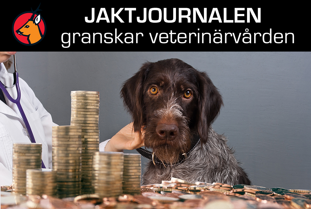 Stiftelsen djursjukhus i Stor-stockholm tjänade en halv miljard kronor samtidigt som veterinärkostnaderna för djurägare sköt i höjden.