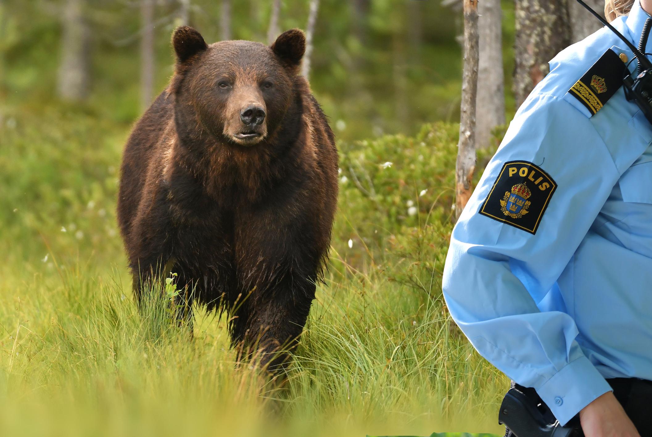 hur många poliser finns det i sverige