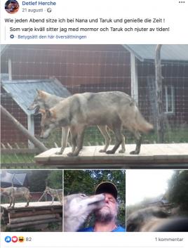 Ägaren Detlef Herche visar stolt upp sina vargar på Facebook. Foto: Detlef Herche/Facebook
